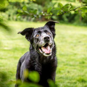Schwarzer Hund im Grünen