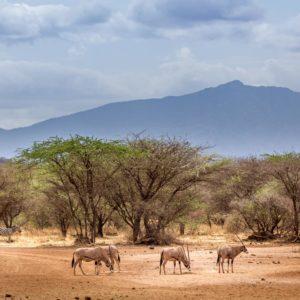 Wildlife Fotografie Gezellen Bäume Berg