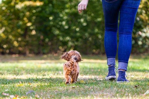 Hund folgt Frauchen