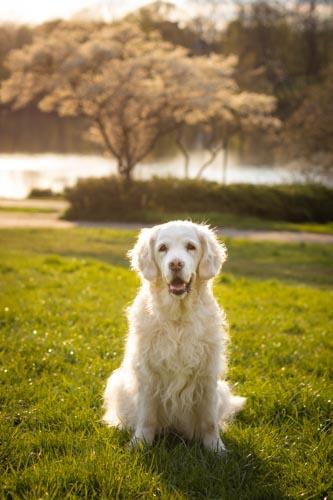 Hund zum Sonnenuntergang am See