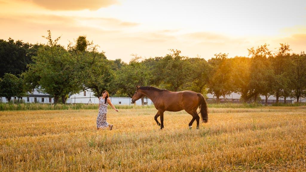 Pferd und Besitzerin zum Sonnenuntergang auf dem Stoppelfeld