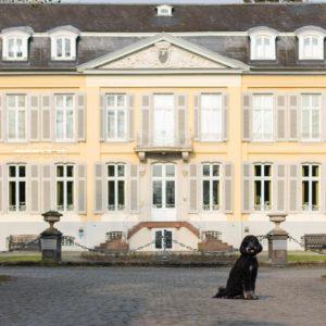 Pudel vor Schloss Morsbroich
