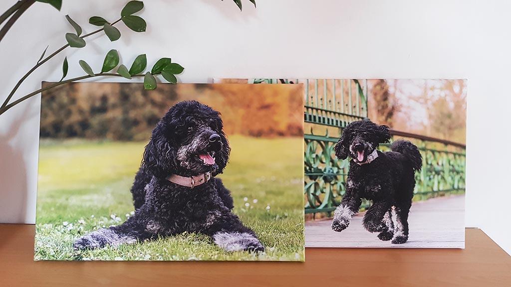 Wandbilder Leinwand Hund