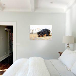 Wandbild mit Hund an Wand in Schlafzimmer