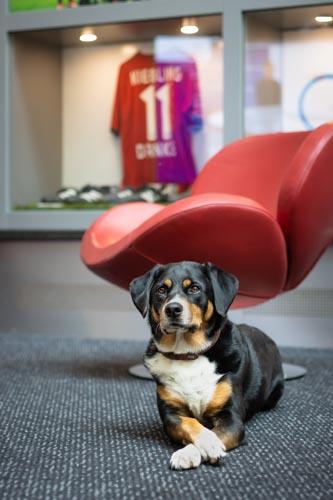 Hund in Lobby Lindner Hotel BayArena