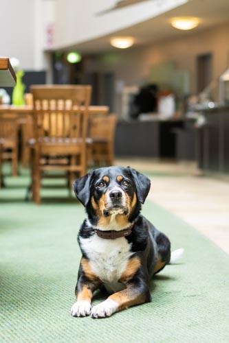 Hund im Restaurant Lindner Hotel BayArena