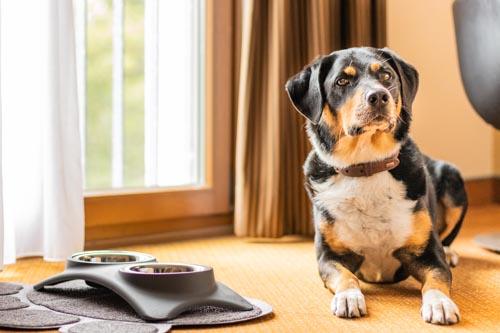 Hund im Zimmer Lindner Hotel BayArena