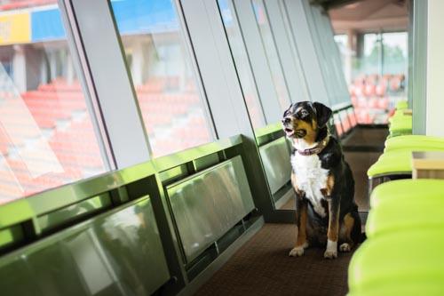Hund in VIP Lounge Lindner Hotel BayArena